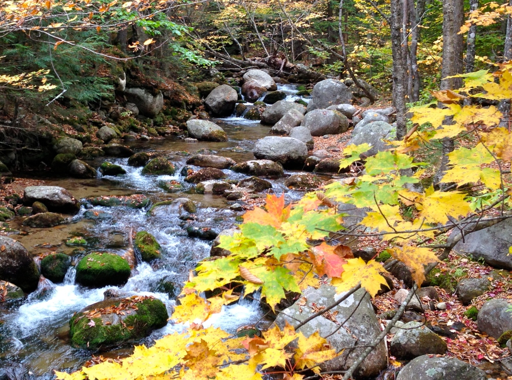 Autumn creek, Center Ossipee, NH (from 2013).