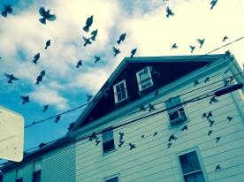 Startled birds, Stonington, CT