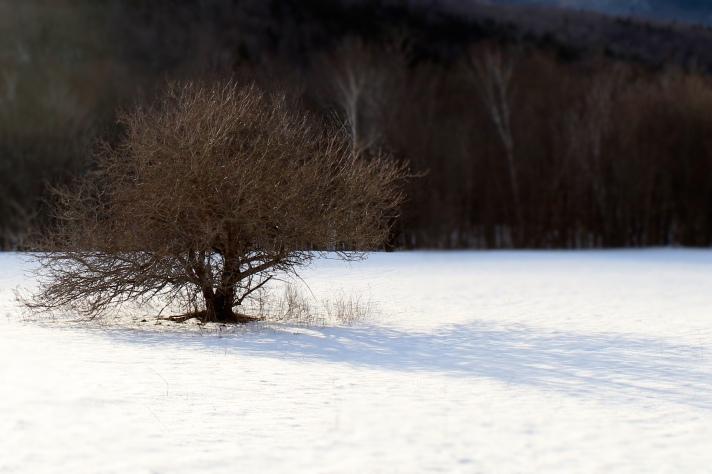 Lone tree, Grafton Notch, ME.