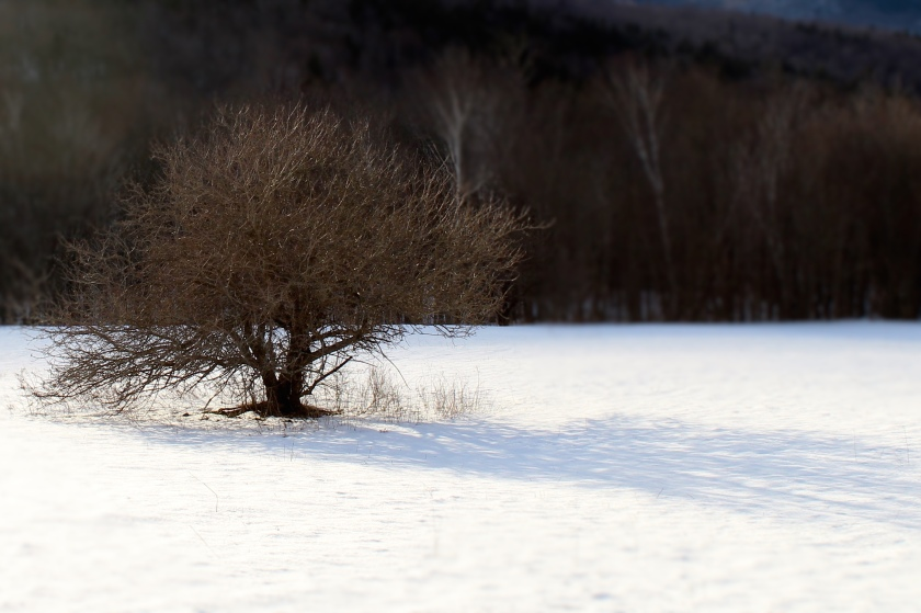 Lone tree, Grafton Notch, ME.