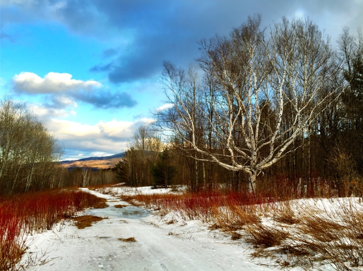 Snowmobile trail, March thaw, Gorham, NH.