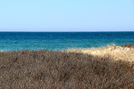 Beach scrub and water, Martha's Vineyard, MA.