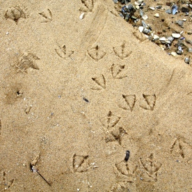 Gull tracks at low tide along breakwater to Wood End Lighthouse, Provincetown, Cape Cod, MA.