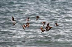 Sea birds, Wood End Lighthouse, Provincetown, Cape Cod, MA.