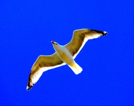 Gull, Providence, RI