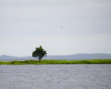 Tree and tidal pond, Nova Scotia
