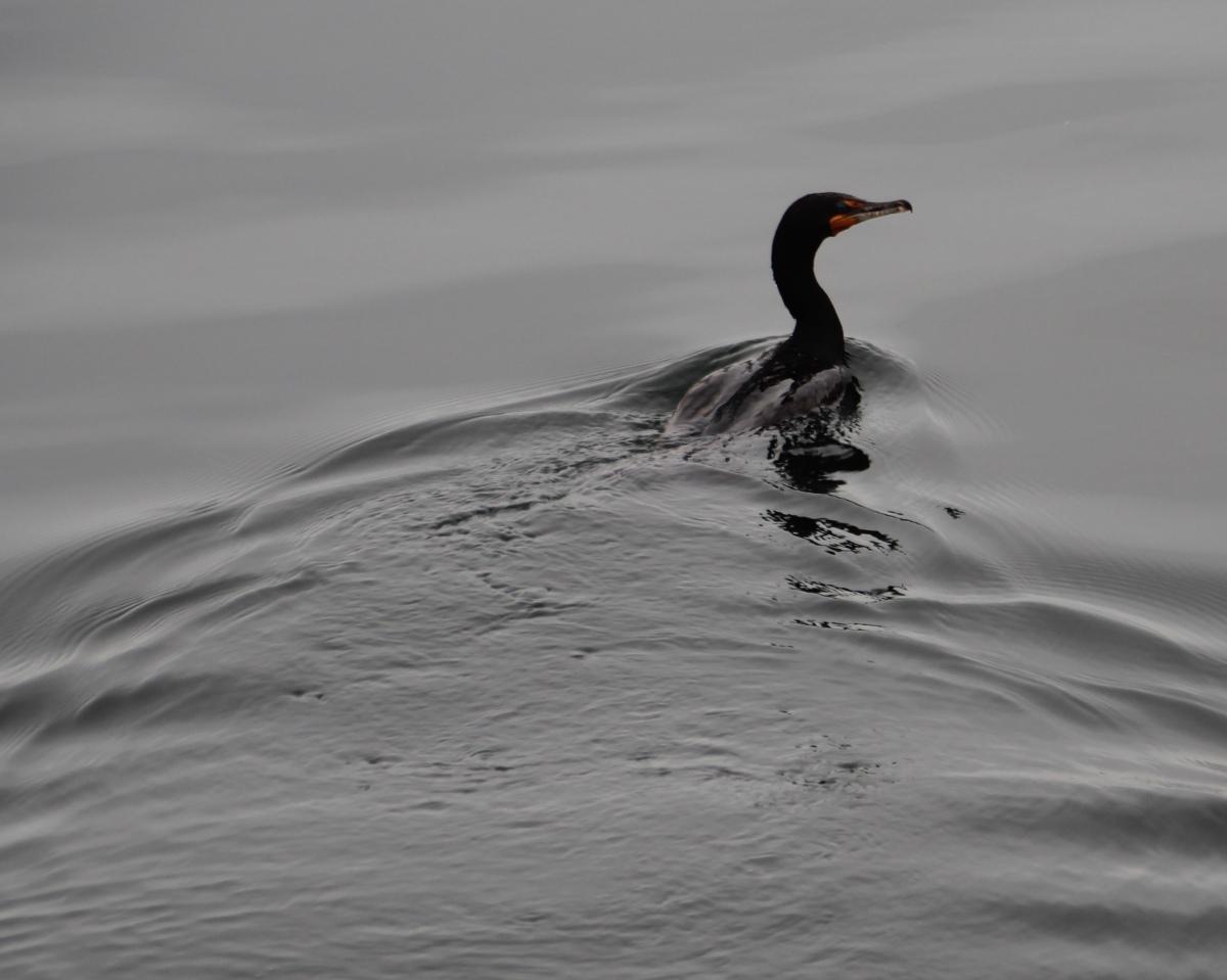 Swim Low