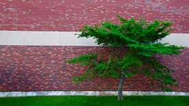 Tree, Saint John High School, Saint John, NB