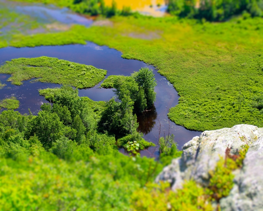 Either a really good diorama of a Berlin, NH, wetland... or a fake miniature of same from atop Mt. Jasper