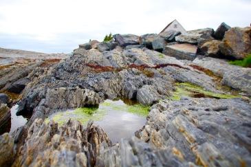Still pool and algae, Blue Rocks, NS