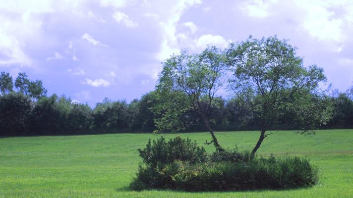 Tree in field outside Bethel, Maine.