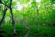 Trail, Smuggler's Notch, Vt.