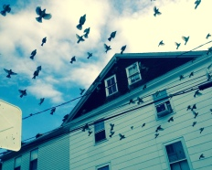 Startled birds, Stonington, Conn., September 2014