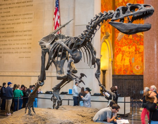 Allosaurus skeleton, New York, N.Y.