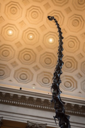 Barosaurus skeleton, American Museum of Natural History, New York, N.Y.