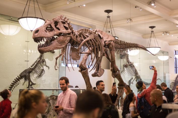 Tyrannosaurus rex skeleton, American Museum of Natural History, New York, N.Y.