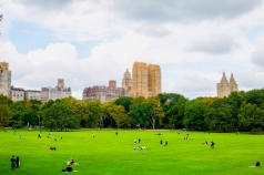 Picnickers at Sheep Meadow, Central Park.